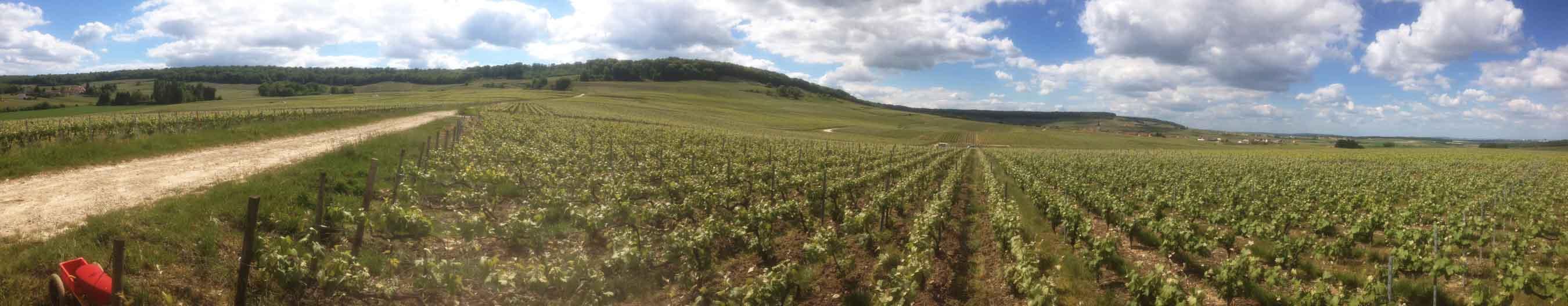 Champagne Labbé - vignes goulat