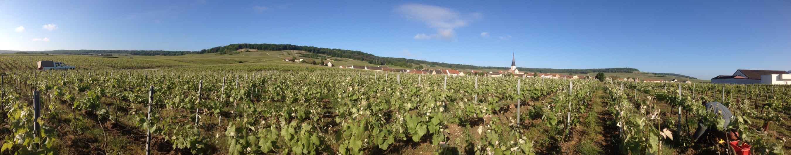 démarche raisonnée viticulture champagne labbé